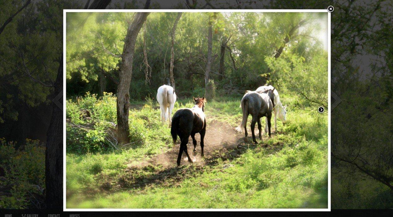 5-C Ranch